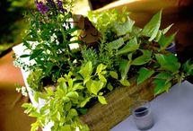 Herb centrepieces