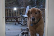 All God's Critters -  Dog's/Funny / by Kay Hough