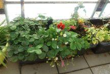 zahrada na balkóně