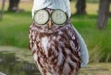 Owl ❥ / Love them. / by Carla Sofía