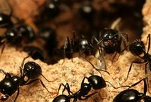 Oklahoma City Pest Control / Oklahoma City Pest Control might take a while to show its impact but will absolutely work over time. Browse this site http://www.oklahomacity.pestservicenetwork.com/ for more information on Oklahoma City Pest Control. When it involves chemical insect control, pest services use safety measures to avoid any adverse effects from the chemicals.