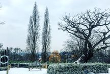 Snow at the Horniman