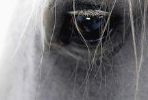 Häst bilder
