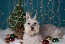 Dog Christmas Portraits