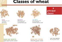 Frumento, Mais: i Cereali che ci accompagnano tutti giorni!