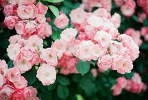 Flowers and plants / by En Mi Bolso