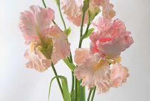 Fito art virágok