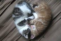 kleine katjes