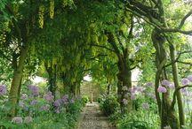 příroda -zahrada