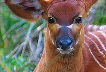 Animals-Deer / Deer / by Ellary Branden