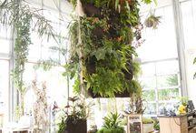 Indoor garden-spiration