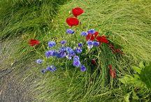 Bloemen / Alle bloemen buiten en binnen.