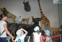Science / Gradinita English Adventure la Muzeul Antipa