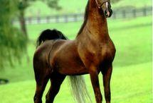 Posture de chevaux