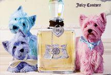 fragrances / by Carol Bourgeois