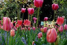 〜Monet's garden〜 / 素晴らしき色彩世界