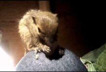My Little Squirrel