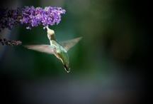 Just Birds / Mostly Birds from my yard. / by Jo-Ann Stafford