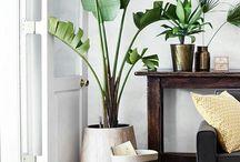 shop inspo - plants