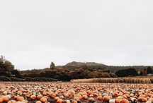 fall / apple pickin, pumpkin spice & everything sweet