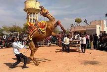 horse dance and camel dance / horse dance and camel dance