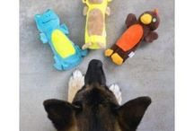 hondenspeelgoed / Hondenspeelgoed voor elke hond https://www.pejediertotaal.nl/hondenartikelen/hondenspeelgoed