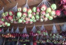 storage of fruits/berries, nuts & vegetables*