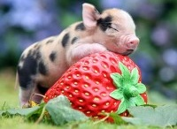 This Little Piggy went to market... / by Anita Ortiz