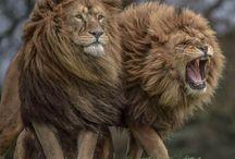 Amazing Animals / Tierfotos