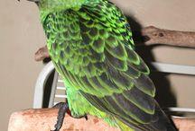 Pet - Bird