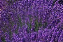 Πασχαλί -lilac / χρώμα