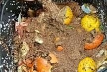Composting / All about composting and more than just soil improvement.