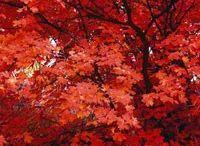 L'enchantement d'automne