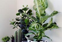 Garden-Plant