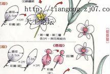 orkide tohumu