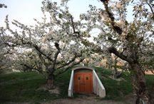 orchard life.....