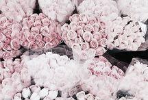 • Flowers •