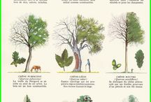 trees~plants~forests