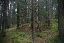 Forrest ❤ Metsä