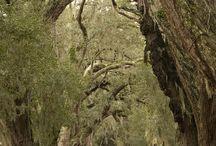 florestas medievais