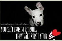 Pit Bulls - Judge the Deed, Not the Breed / by Jane Laycock