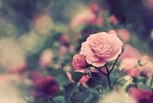 Floral / by Hayal Mutlu