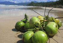 coconut / http://spiceexporters.in  coconut exporters from india