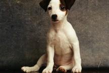 beautiful photos of dogs