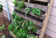Growing veggies / by Ingrid Aragon