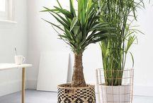 PLANTS - Decoration