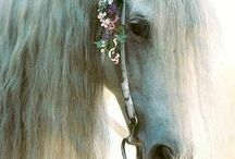 Beautiful horses / It's very cute and beautiful.