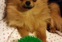 My dog Miele