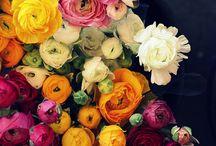 Flowers- Ranunculus / by Amanda Brazelton