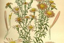 tablice botaniczne